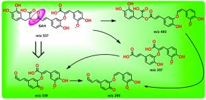 丹酚酸H的裂解途径