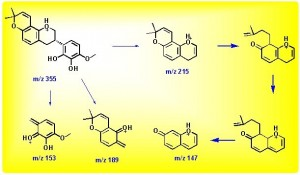 3'-羟基-4'-O-甲基光杆草定的负离子裂解途径