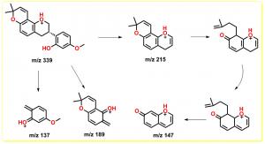 4'-O-甲基光甘草定的正离子裂解途径