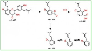 3-羟基光甘草醇的正离子裂解途径