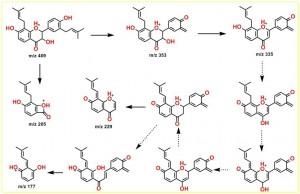 3-羟基光甘草醇的负离子裂解途径