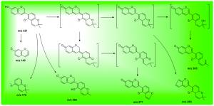 光甘草素的负离子模式裂解途径
