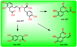 丹酚酸D的裂解途径