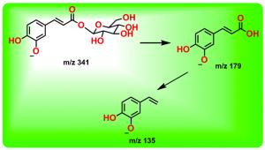1-O-咖啡酰葡萄糖的裂解途径