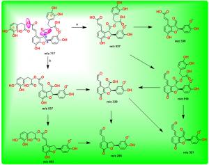 紫草酸B的裂解途径