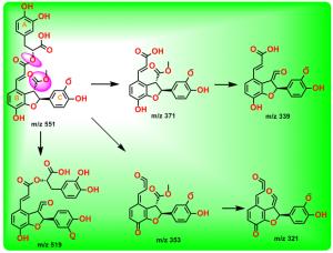 紫草酸B甲酯的裂解途径