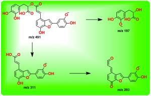 丹酚酸C的裂解途径