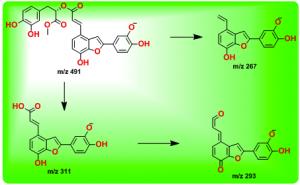 丹酚酸C甲酯的裂解途径